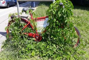 Fahrrad Salcher Augsburg ist der Beste